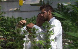 160307192406-kosher-cannabis-israel-pkg-liebermann-00002730-exlarge-169.jpg