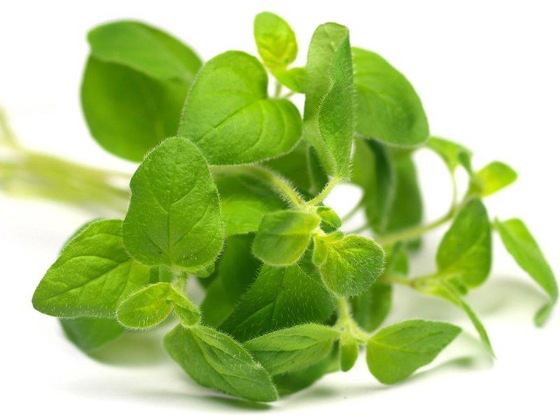 Điều trị và phòng tránh bệnh viêm họng bằng các loại cây cỏ thuốc nam